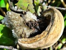 Strange plant fruit Royalty Free Stock Images
