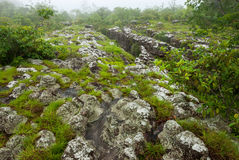 The strange rock at lan hin pum in phu hin rong kla national park. Of thailand Royalty Free Stock Images