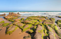 Strange rocks and moss at Co Thach beach Royalty Free Stock Image