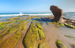 Strange rocks and moss at Co Thach beach Stock Images