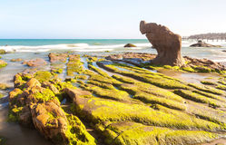 Strange rocks and moss at Co Thach beach Royalty Free Stock Images