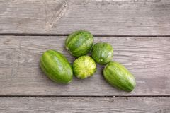Strange round cucumbers. Rounded cucumbers royalty free stock images