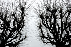 Strange scary trees Royalty Free Stock Photo