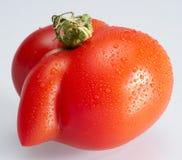 Strange shaped wet tomato. Strange shaped red wet tomato in light grey back Stock Images