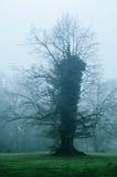 Strange single tree Royalty Free Stock Images