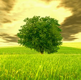 Strange sky and green tree Stock Photos