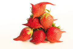 Strange and surreal strawberries. Stock Image
