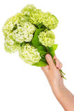 Strange terry flowers Stock Image