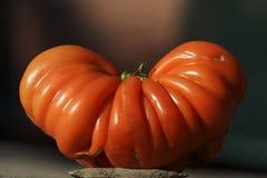 Strange tomato Royalty Free Stock Image