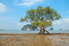Free Strange Tree Royalty Free Stock Image - 49732726