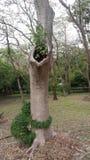 Strange tree royalty free stock image