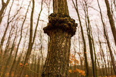 Strange tree Stock Images