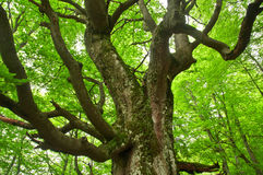 Strange tree Stock Image