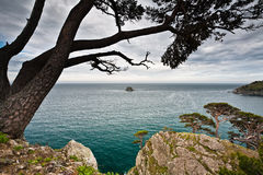 Strange tree on the hill by the sea Stock Images
