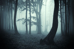 Strange tree silhouettes in a dark forest Royalty Free Stock Photo