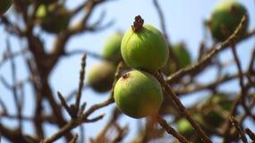 Strange Tropical Fruits Royalty Free Stock Image
