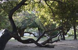Strange trunk growing sideways. royalty free stock photos