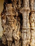 Strange trunk of tree like a human body. In concrete tank Royalty Free Stock Photos