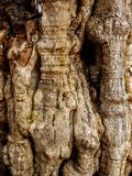 Strange trunk of tree like a human body. In concrete tank Royalty Free Stock Photography