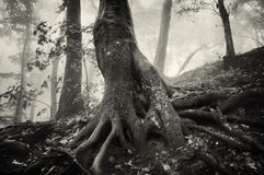 Strange twisted tree in enchanted forest Stock Image