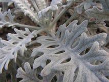 Strange white plant Royalty Free Stock Photography