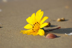 Stranger on the beach. Yellow flower on sand Royalty Free Stock Photo