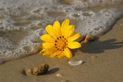Stranger on the beach. Yellow flower on sand Royalty Free Stock Images