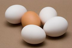 Among Strangers. White and Brown Eggs stock images