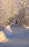 Strangers walking along the path. Park. Winter landscape of nature. Stock Image