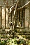 Stranglerfeige, die alte Ruinen von Beng Mealea, Kambodscha überholt Stockfoto