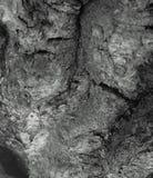 Straniero da un altro mondo Corteccia di un ritratto scultoreo dell'albero-un dello sconosciuto l'altro mondo Ritratto di uno spa Immagini Stock Libere da Diritti