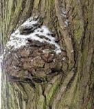 Straniero da un altro mondo Corteccia di un ritratto scultoreo dell'albero-un dello sconosciuto l'altro mondo Ritratto di uno spa Immagini Stock