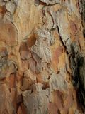 Straniero da un altro mondo Corteccia di un ritratto scultoreo dell'albero-un dello sconosciuto l'altro mondo Ritratto di uno spa Fotografia Stock Libera da Diritti