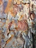 Straniero da un altro mondo Corteccia di un ritratto scultoreo dell'albero-un dello sconosciuto l'altro mondo Ritratto di uno spa Immagine Stock Libera da Diritti
