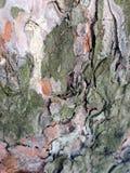 Straniero da un altro mondo Corteccia di un ritratto scultoreo dell'albero-un dello sconosciuto l'altro mondo Ritratto di uno spa Immagine Stock