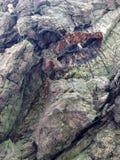 Straniero da un altro mondo Corteccia di un ritratto scultoreo dell'albero-un dello sconosciuto l'altro mondo Ritratto di uno spa Fotografie Stock Libere da Diritti