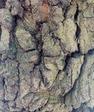 Straniero da un altro mondo Corteccia di un ritratto scultoreo dell'albero-un dello sconosciuto l'altro mondo Ritratto di uno spa Fotografia Stock