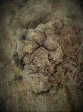 Straniero da un altro mondo Corteccia di un ritratto scultoreo dell'albero-un dello sconosciuto l'altro mondo Ritratto di uno spa Fotografie Stock