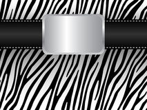 Strap on the background of a zebra Stock Photos