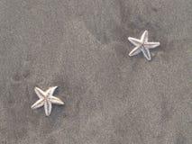 在海滩的Strars 免版税库存照片