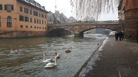 Strasbourg at Christmas, rivers and condors. This time we entered 2015 with unfrozen river, cold-aged couple walking Royalty Free Stock Images