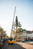 Strasbourg Christmas Tree Erected. Strasbourg, France - November 5, 2013: Installation of a giant Christmas tree by cranes on the Place Kleber in Strasbourg's Stock Photos