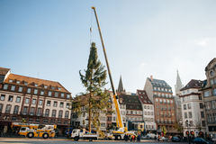Strasbourg Christmas Tree Erected. Strasbourg, France - November 5, 2013: Installation of a giant Christmas tree by cranes on the Place Kleber in Strasbourg's Royalty Free Stock Photo