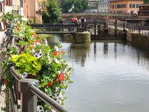 Strasbourg flowers Royalty Free Stock Photography