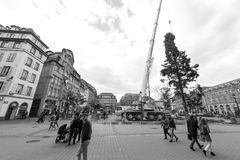 Central Christmas Tree Install in Place Kleber black and white. STRASBOURG, FRANCE - OCT 30, 2017: Strasbourg Christmas Tree Install in central Place Kleber Stock Photo
