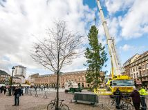 Central Christmas Tree Install in Place Kleber. STRASBOURG, FRANCE - OCT 30, 2017: Tall crane installing Strasbourg Christmas Tree in central Place Kleber Square Stock Photos