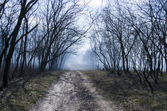 straszna ciemna lasowa scena Obrazy Stock