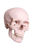 Straszna czaszka Zdjęcie Stock