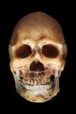 straszna czaszki Zdjęcia Royalty Free