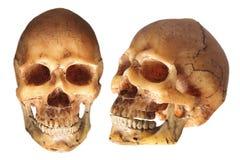 straszna czaszki Zdjęcie Royalty Free